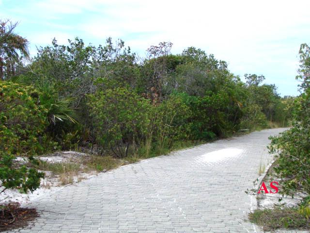 caminho de obs de aves