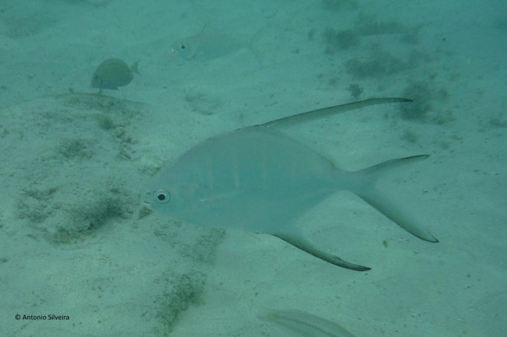 Peixes3-BCatalina-Aruba-24-5-17-ASilveira