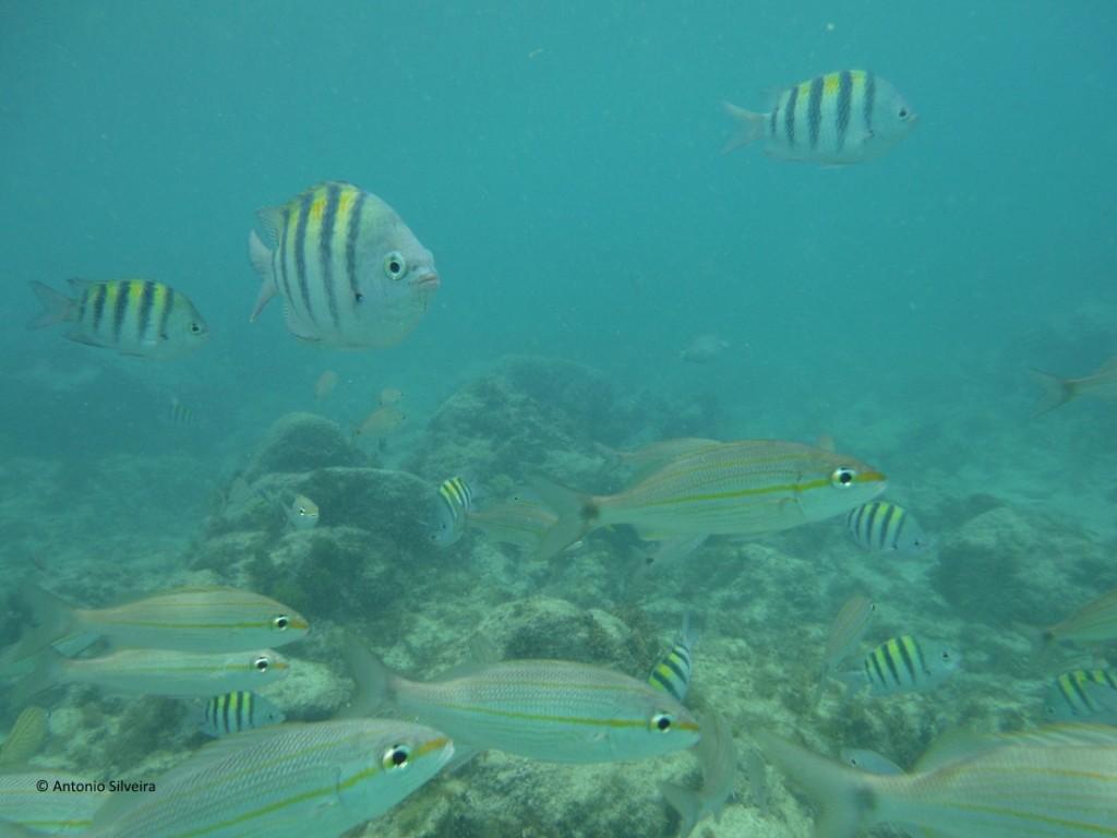 Peixes6-BCatalina-Aruba-24-5-17-ASilveira