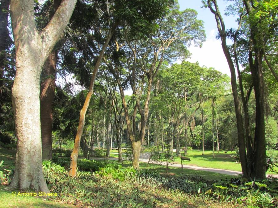 JardimBotanico5-SP-27-10-11-ASilveira