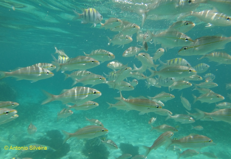 Fish watching in aruba a ltima arca de no Fishing in aruba