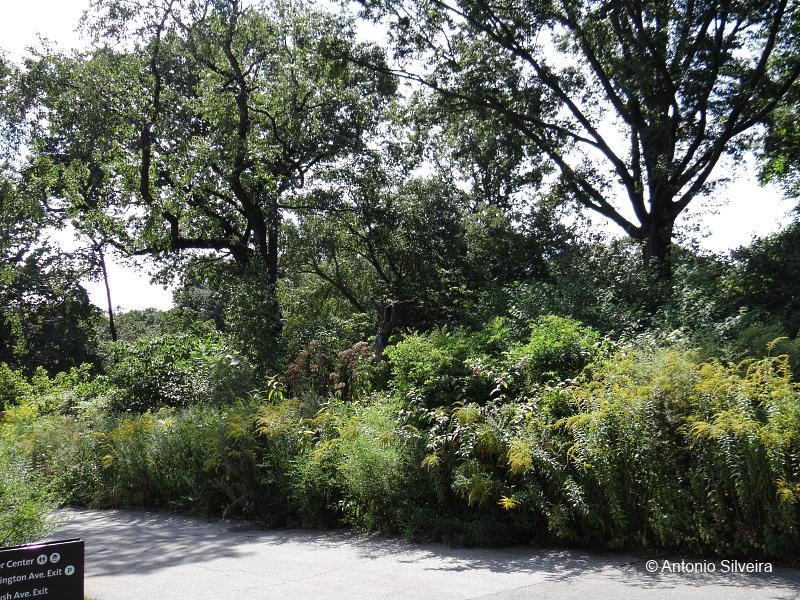 Brooklyn Botanic Garden Ny Usa A Ltima Arca De No