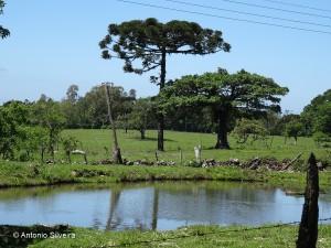 Paisagem1-VlQuilomboGramadoRS-BR-28-1013-ASilveira
