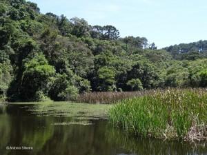 Lago1-PedraGrande-PECantareiraSP-Br-17-1-15-ASilveira