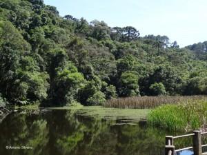 Lago2-PedraGrande-PECantareiraSP-Br-17-1-15-ASilveira