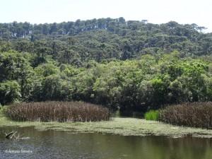 Lago4-PedraGrande-PECantareiraSP-Br-17-1-15-ASilveira