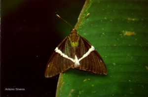 Mariposa-SertaoBaleiaSSSP1-91-ASilveira