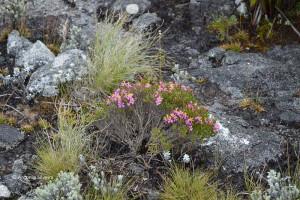 Flora1-PedradaMinaSP-BR-5-3-15-ASilveira