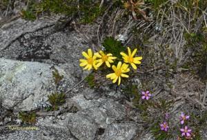 Flora3-PedradaMinaSP-BR-5-3-15-ASilveira