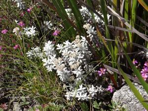 Flora6-PedradaMinaSP-BR-5-3-15-ASilveira
