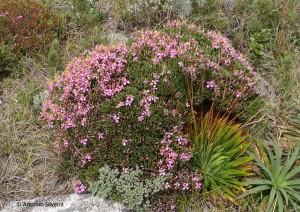 Flora8-PedradaMinaSP-BR-5-3-15-ASilveira