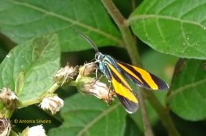 mariposa2-jdbotanicosp-br-19-9-16-asilveira