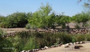 Sunset Park3-LVegas-NV-16-7-15-ASilveira