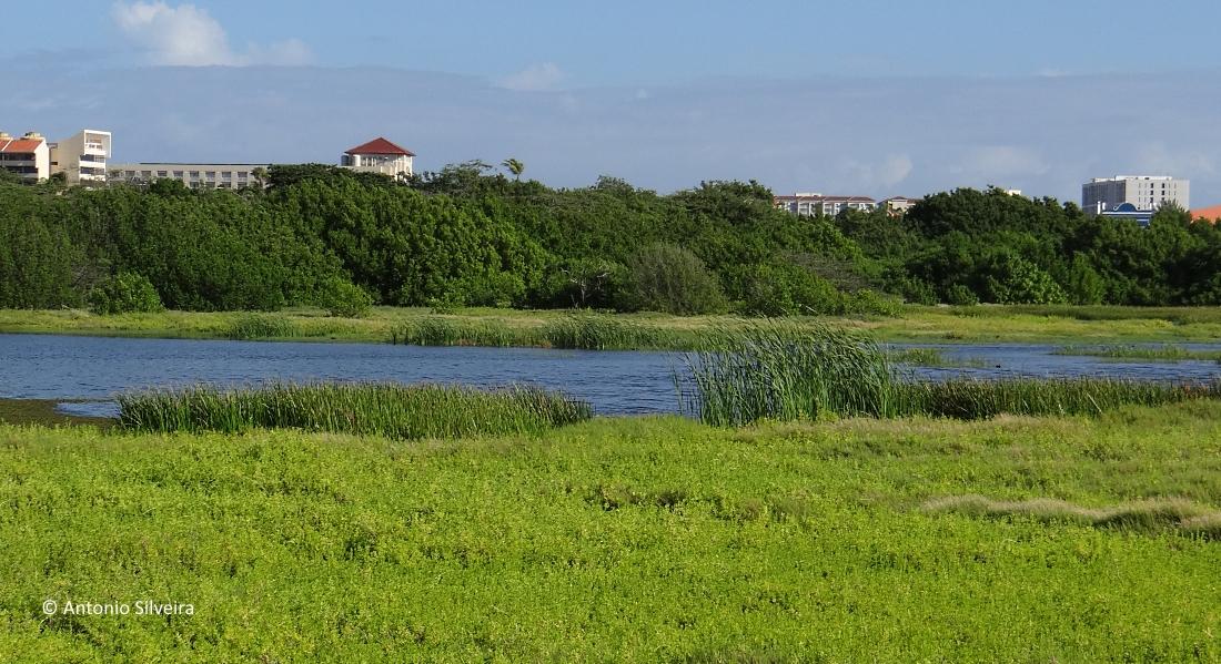 Alagados5-PalmBeach-Aruba-20-11-15-ASilveira