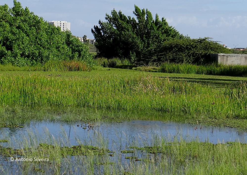 Alagados6-PalmBeach-Aruba-20-11-15-ASilveira