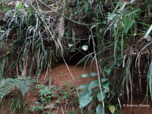 Baryphthengus ruficapillus-nest-PoçodasAntas-MongSP-BR-11-8-15-ASilveira