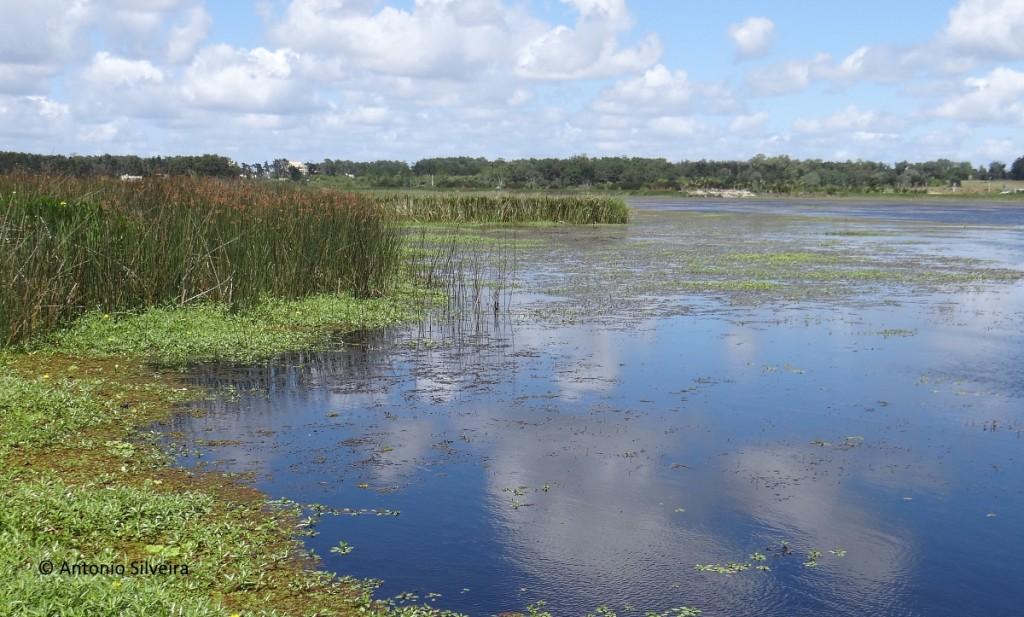 Laguna del Diario2-UY-19-12-15-ASilveira