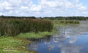 Laguna del Diario7-UY-19-12-15-ASilveira