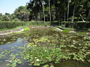 Lago das libelulas2-JdBotanicoSP-BR-7-1-16-ASilveira