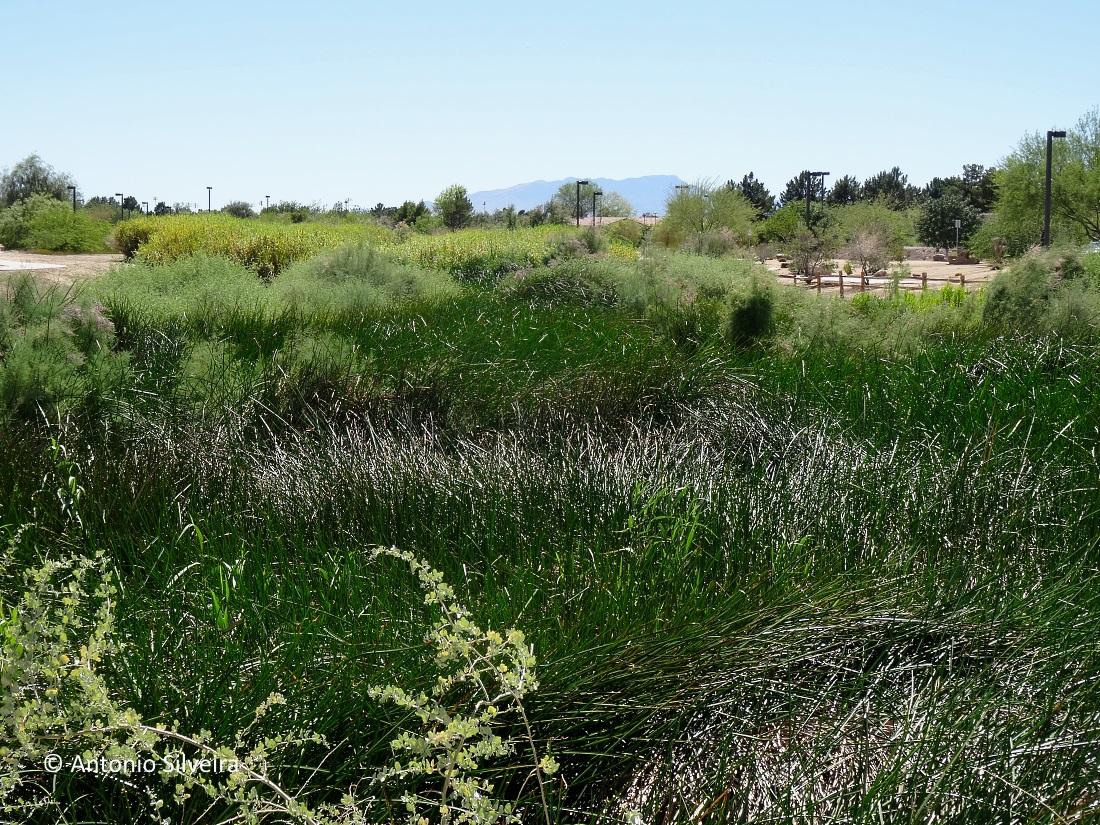 Sunset Park9-LVegas-17-6-16-ASilveira