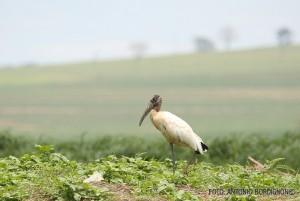 cabeca-seca-tanqua-2016-abordignon-cortesia