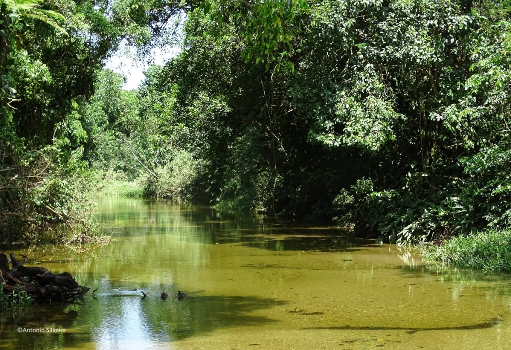 Rio Bixoro4-FazRondonia-MongaguaSP-9-3-17-ASilveira