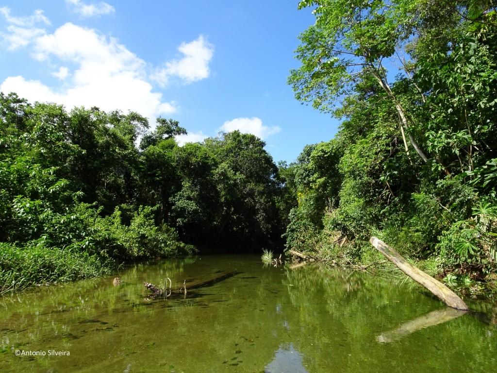 RioBichoro1-MongaguaSP-23-3-17-ASilveira
