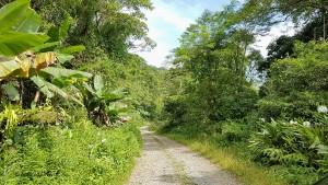 Estrada1-FazRondonia-MongaguaSP-11-4-17-ASilveira